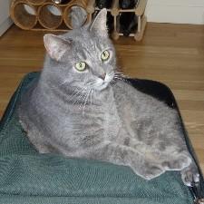 An image of Cat_Matrix